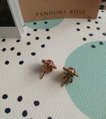Novi Pandora Heraldic Radiance uhani
