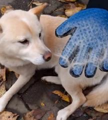 Pawly rokavica za psa/mačko