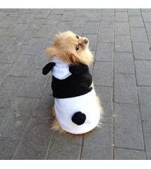 Nova oblekica za psa panda