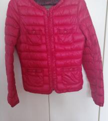 Prehodna jaknica st. S