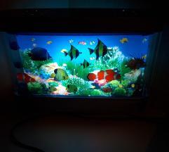 Lucka akvarij