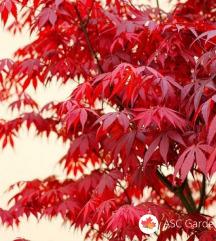 SEMENA 3 ■različna - rože, drevesa, grmi...