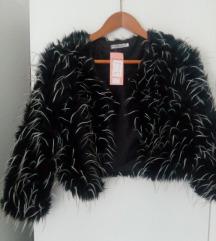 Kratka jaknica - plašček